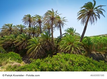 die flora von kreta blumen kr uter b ume palmen orchideen wald diktamos und honig auf kreta. Black Bedroom Furniture Sets. Home Design Ideas